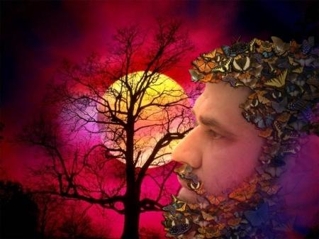 Josan Caballero: Mariposa del Sol
