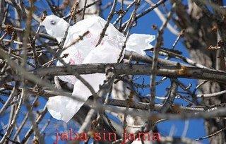 La libertad como una paloma bolsa atrapada en el árbol...Margarita García Alonso.