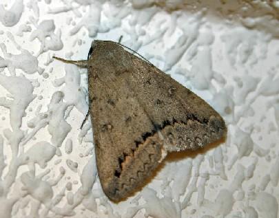 Datanatura en que se diferencia una mariposa de una polilla - Acabar con las polillas ...