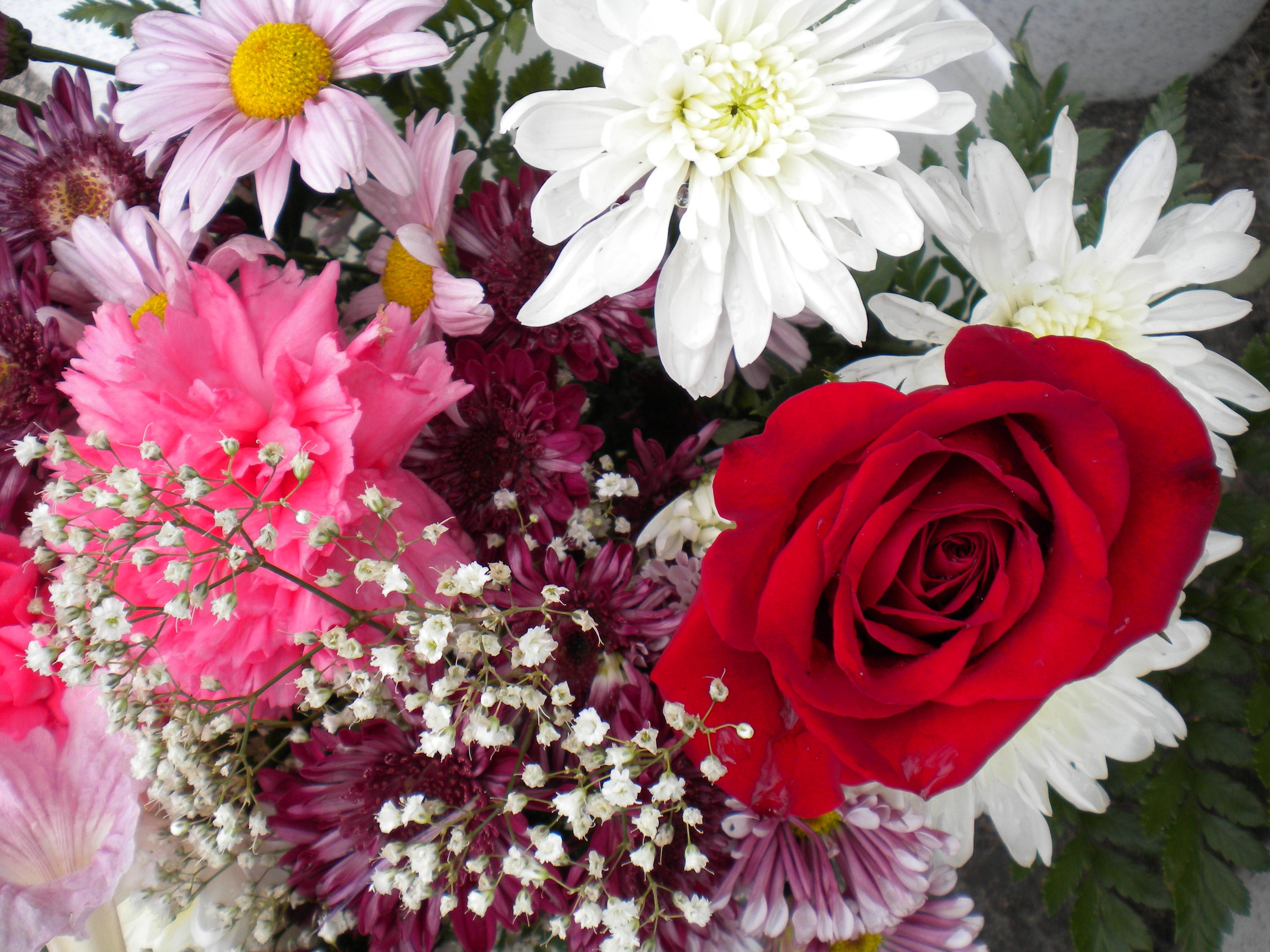 Flores para las Madres del Mundo. Foto de Josán Caballero.