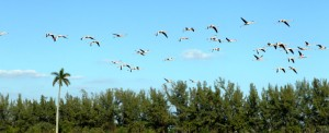 Banners-Genericos-Flamingos-04-980x400