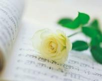 rosa-blanca1